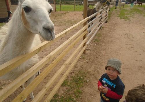 Mums ļoti patika pie kamieļiem un lamām Rakšos