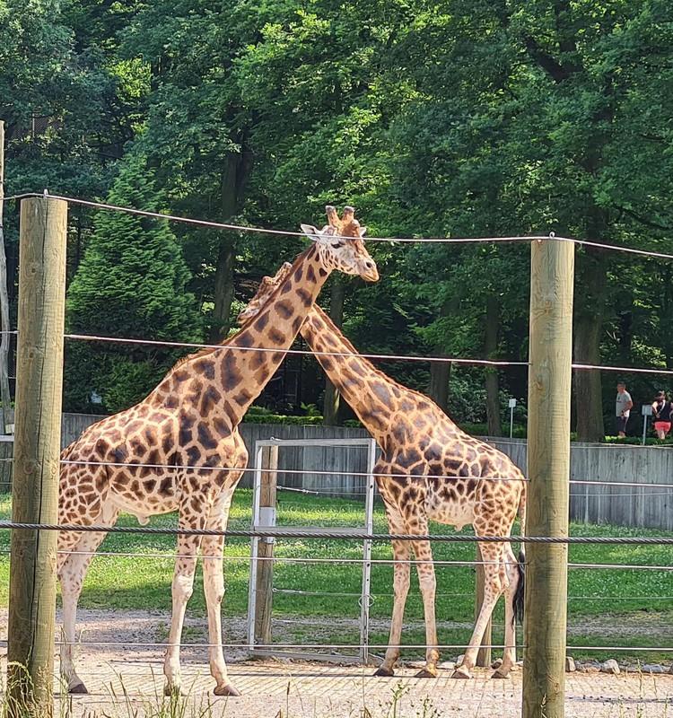 Krakovas zooloģiskais dārzs