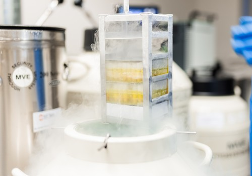 Cilmes šūnas -  mūsdienu zinātnes dāvana tiem, kas domā par rītdienu