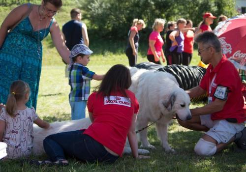 Sezonas atklāšanas pasākumā 20.augustā Pireneju kalnu suņi