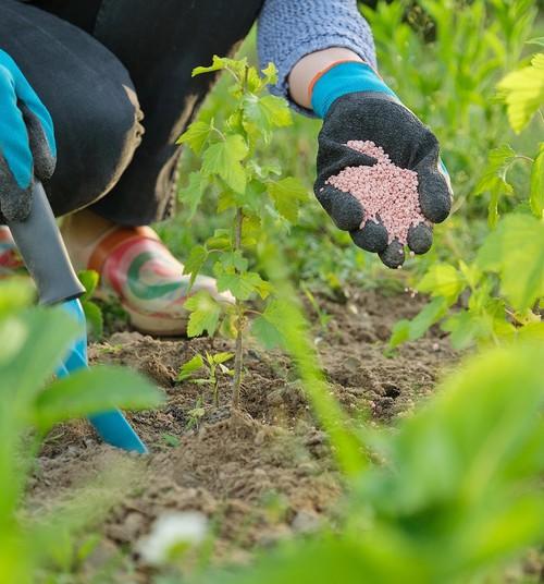 Lai zeme paēdusi un augi zaļo: mēslojumi un substrāti pavasarim