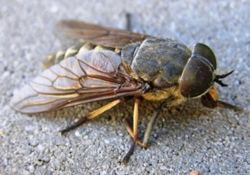 """Bērnudārza dienasgrāmata: šīs vasaras """"trakie"""" kukaiņi"""