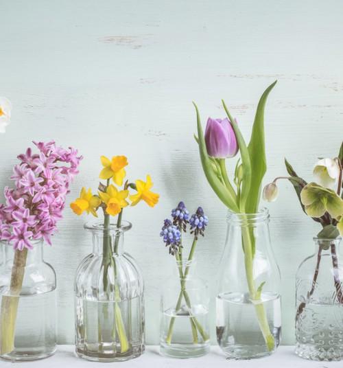 Pavasara vēstnesis – dārzs uz palodzes