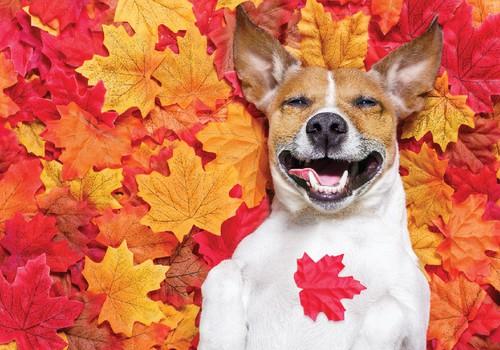 Paldies par četrkājaino mīluļu rudens bildēm!