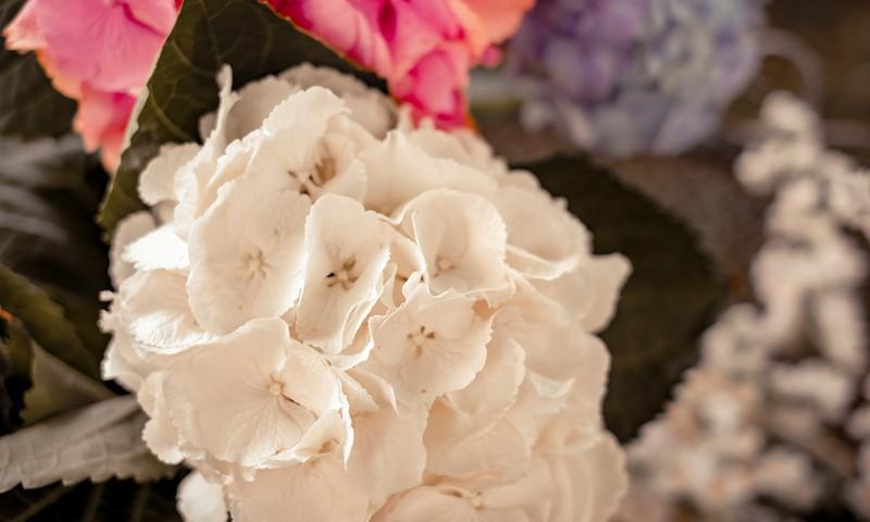 """KONKURSS: Laimē 50 EUR vērtībā ziedus no """"Ziedu ekspresis"""""""