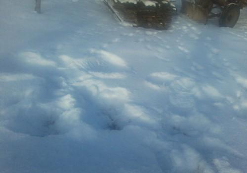 ... dosimies ārā veidot sniega eņģeļus.