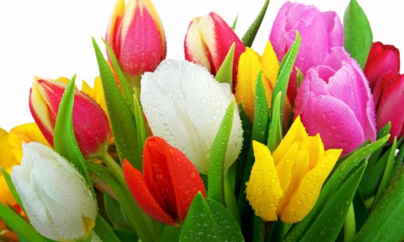 Lai izdevies 8.marts! Ieprogrammē sevi komplimentiem!