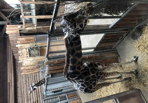 Brīvdienas svaigā gaisā: arī ziemā ir ko darīt Rīgas Zoo!