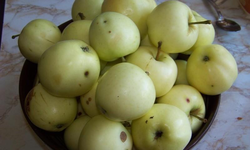 Ābolu laiks- labsajūtas laiks