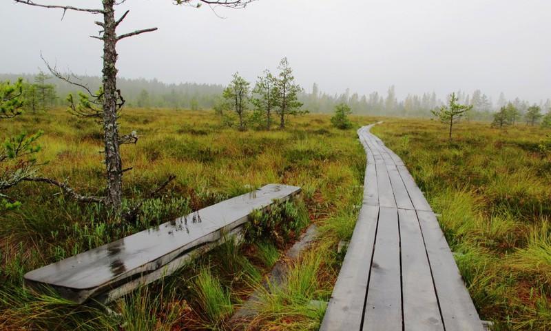#PaliecMājās: Latvijas valsts meži uz laiku slēguši purvu takas un skatu torņus
