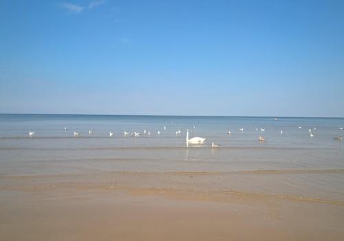 Putni pārņem jūru