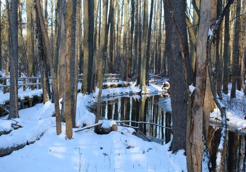 Arī ziemā var baudīt - Dumbrāja taka