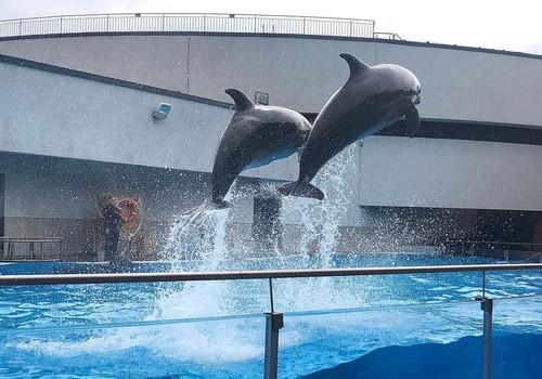 Klaipēdas delfinārijs un jūras muzejs