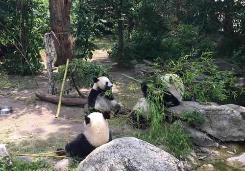 Šēnbrunnas Zooloģiskais dārzs Vīnē - burvīga vieta ģimenes ekskursijai