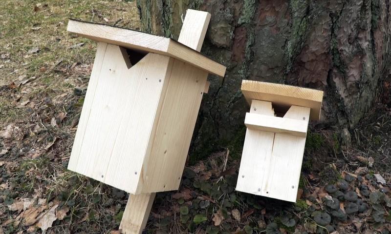 """Rīgas Zooloģiskajā dārzā  """"Putnu dienas"""" – tavās mājās"""