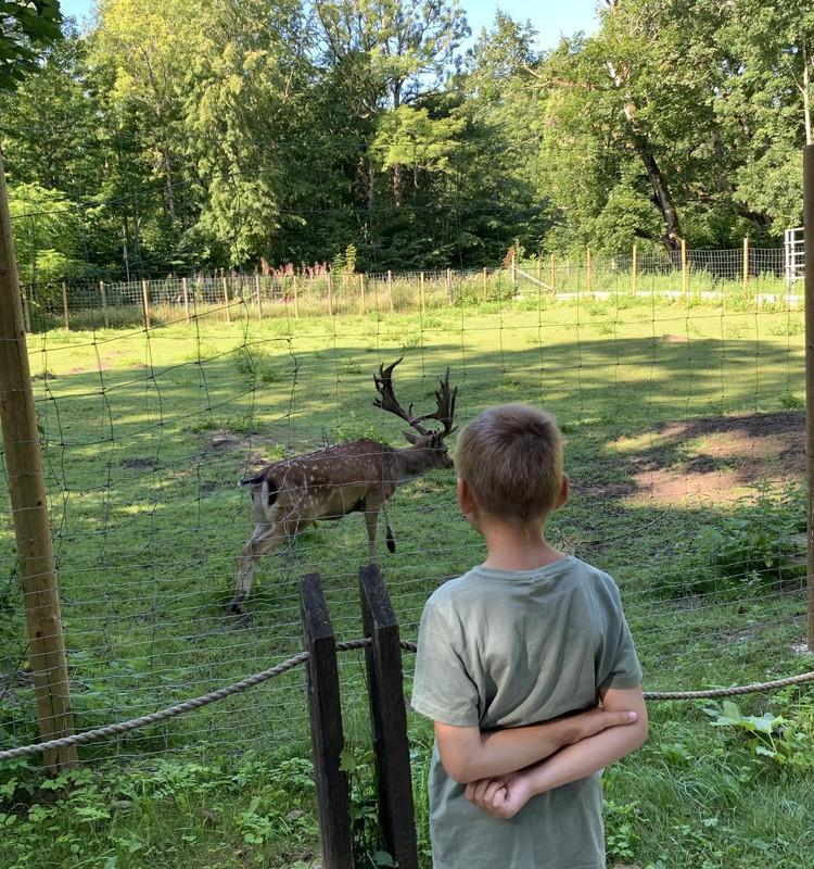 VASARAS GIDS: Elistveres dzīvnieku parks Igaunijā