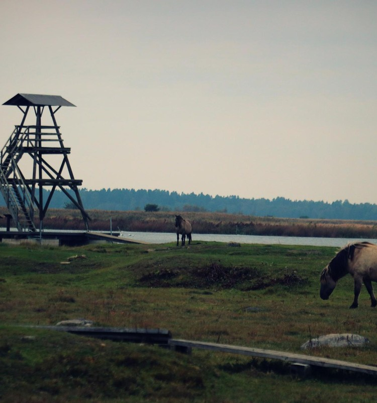 Engures ezera dabas parks rudenī