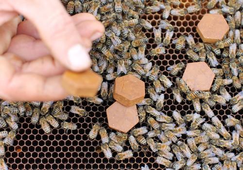Bišu maize – vietējais nenovērtētais superprodukts