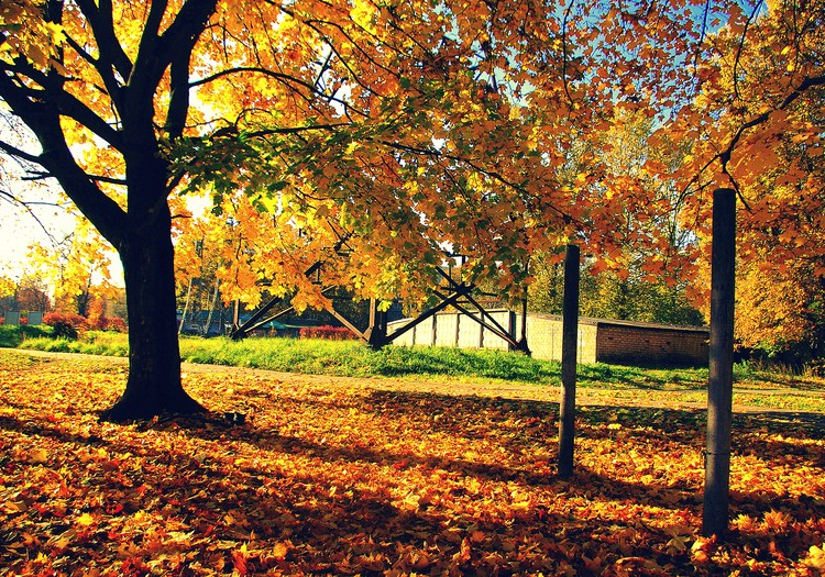 Steidz izbaudīt rudeni!!!