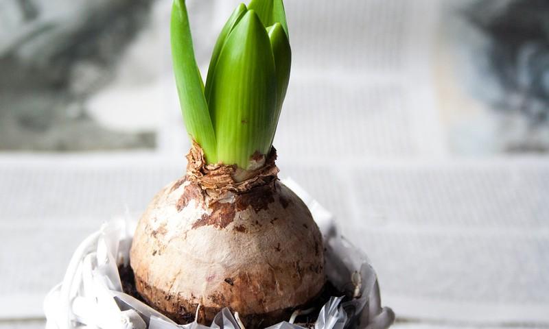 """Mazie dārza darbi kopā ar bērniem – idejas """"zaļo pirkstiņu"""" nodarbināšanai"""