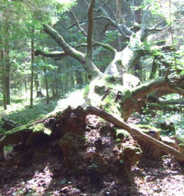 Apceļojam Latviju - Kabile Ozolu biotopu taka