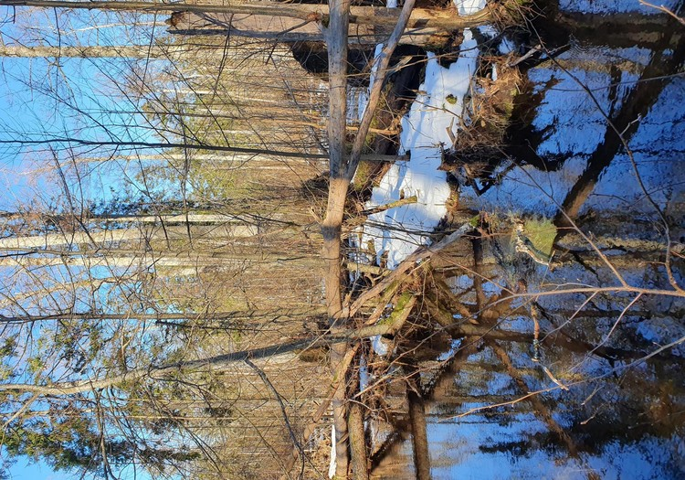Ceļojam ziemā- Melnalkšņu dumbrāju taka