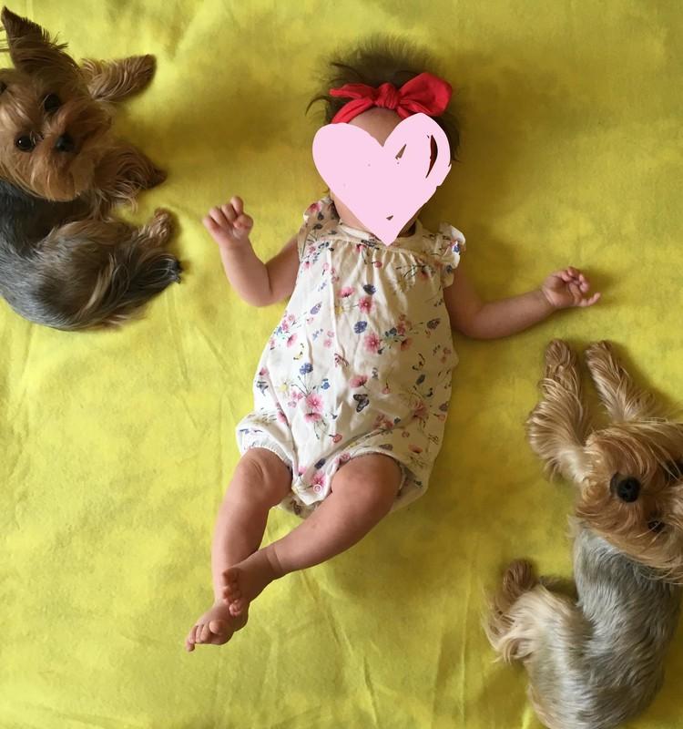 Mūsu ģimenē ir arī suņi