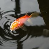 Zinātkārās un sabiedriskās zivtiņas