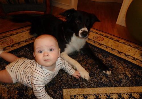 Bērna drošības zelta likumi, ja mājās ir suns. Kinologa Jeļenas Bikas ieteikumi