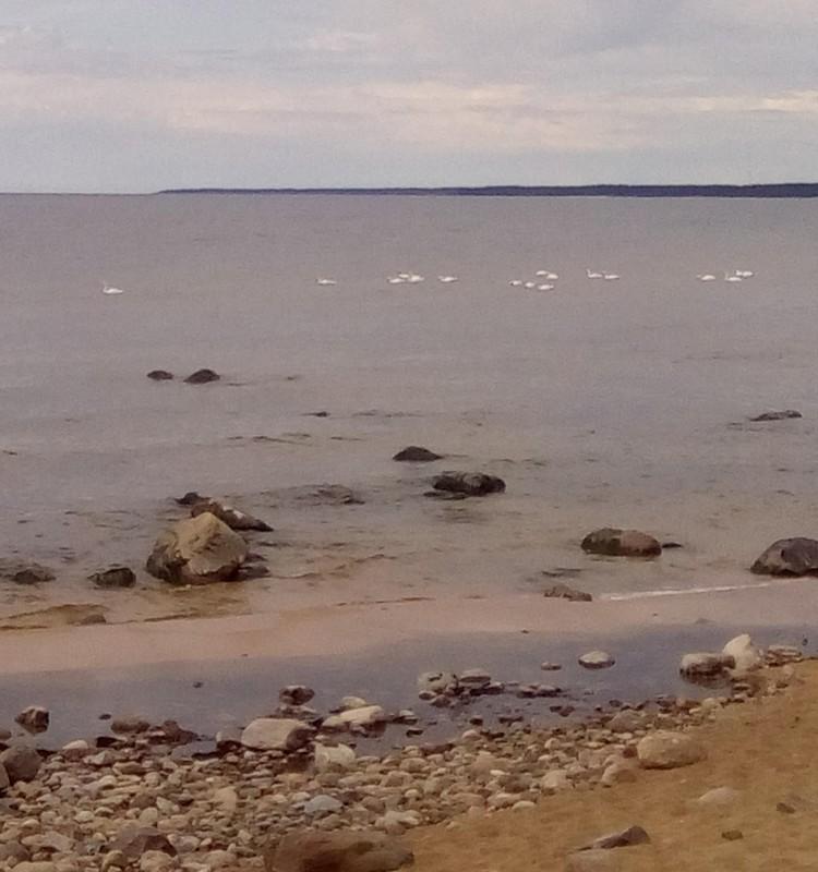 TOP peldēšanās vietas Latvijā
