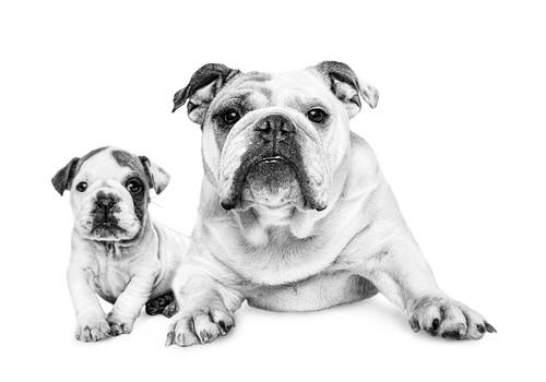 Imūnreakcijas uzlabošanas veidi dzīvniekiem